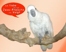 Kakadu Coco liebt den Freisitz. [Herzlichen Dank für das Kundenfoto.]